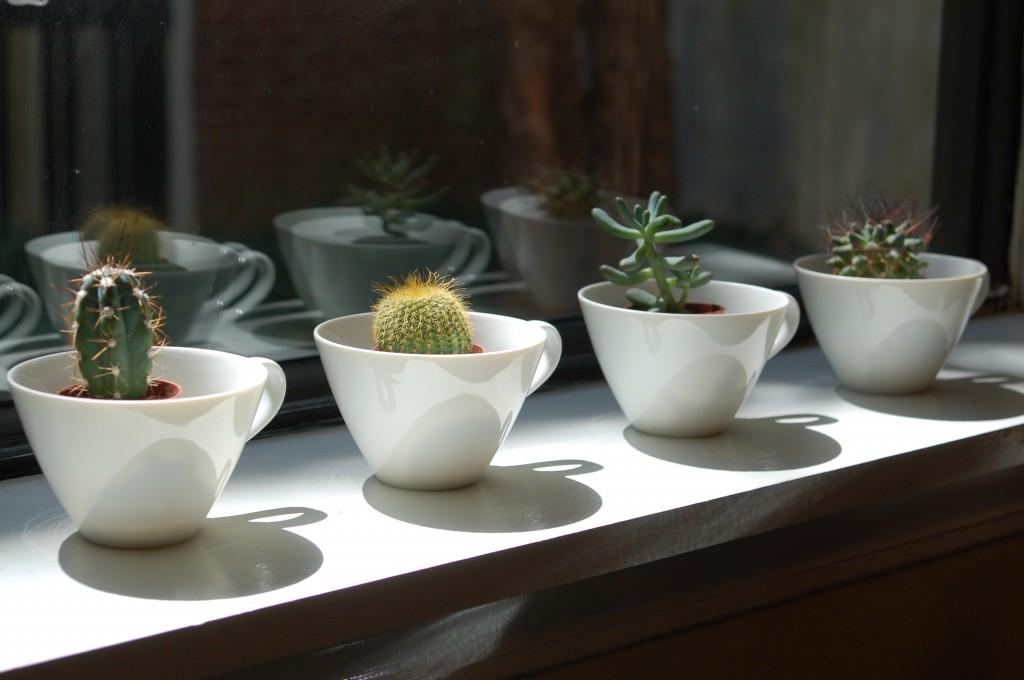 Teacup Cactus Garden