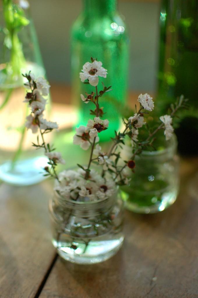 New Zealand tea flowers
