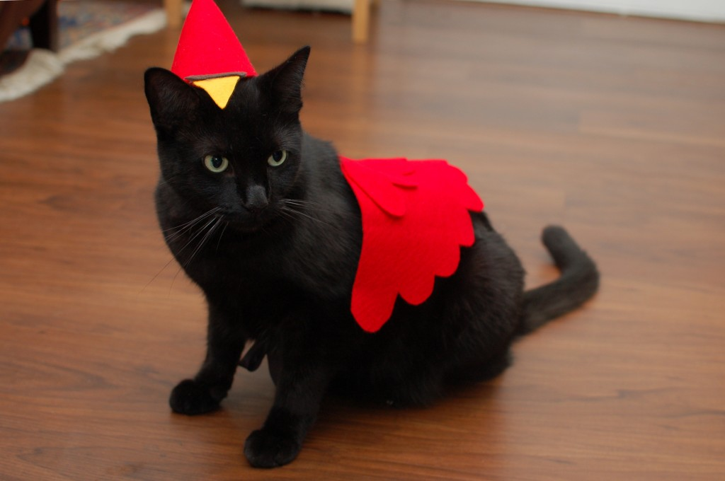 Cardinals cat costume