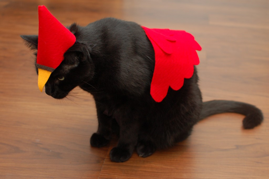 Cardinals costume side view
