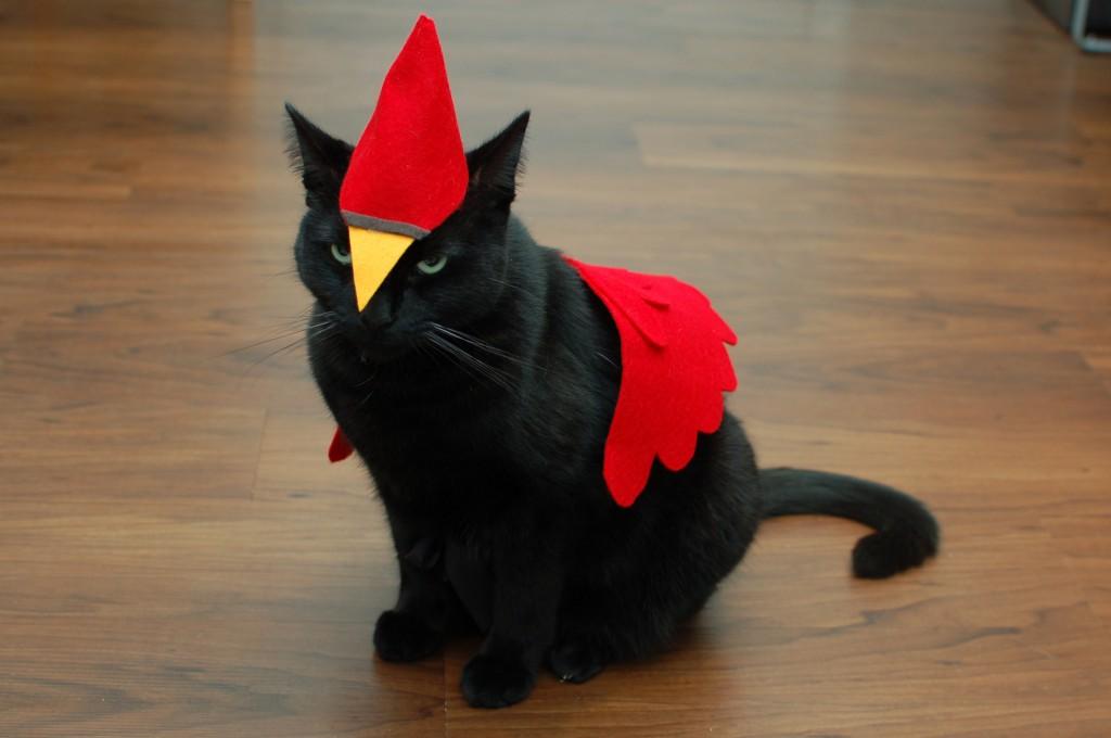 Angry Cardinal cat