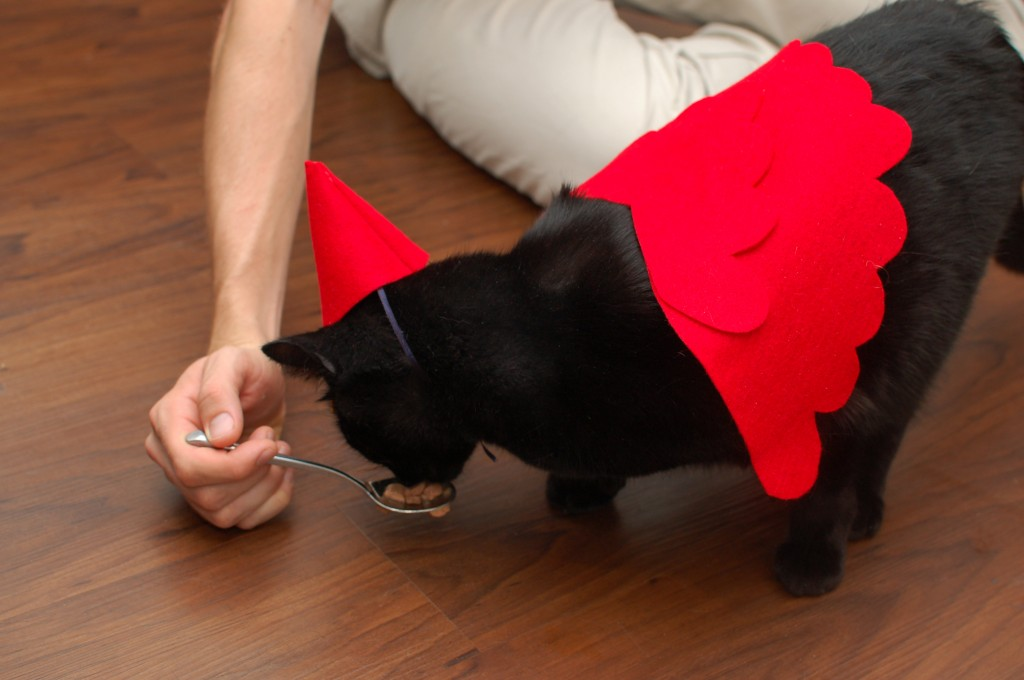 Trick or treating kitty