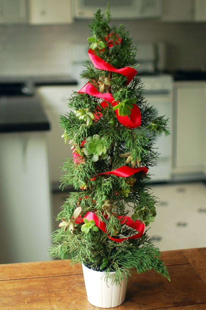 Succulent Christmas Tree Seakettle