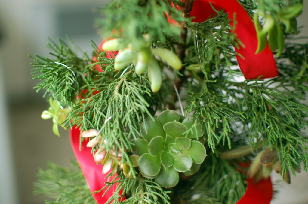 Succulent ornament