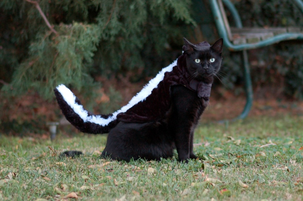 Kitty skunk
