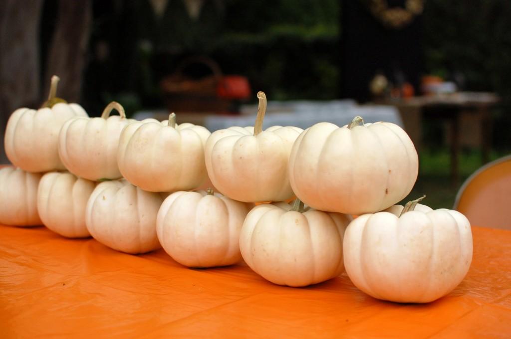 Pumpkin painting table