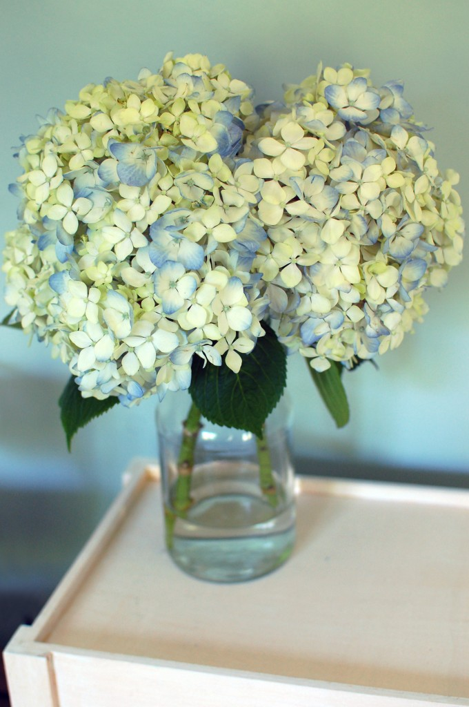 blue hydrangeas | seakettle