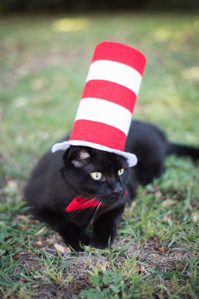 Cat in the Hat Cat Costume