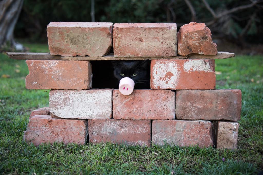 Cat pig costume